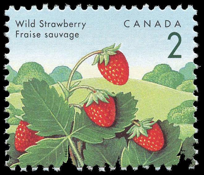 Buy Canada 1350v Wild Strawberry 1992 2 162 Arpin