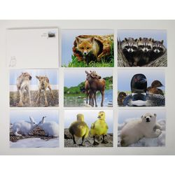 baby wildlife notecard set